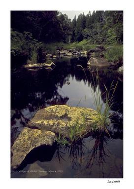 Edge of Alakai Swamp