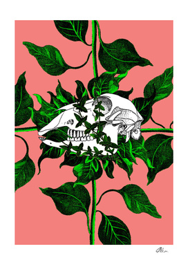Sheep Skull and Ivy