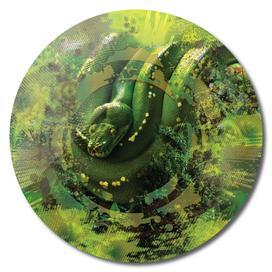 Green Python snake Forest