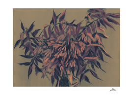 Ash-tree, vintage colors, summer foliage, floral art