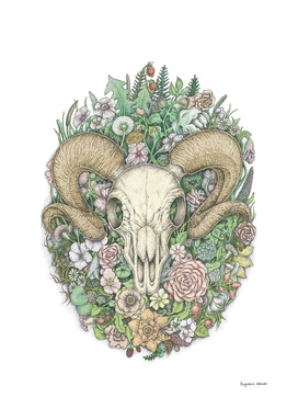 Life's Mystery: Ram Skull (Digital Painting Version)