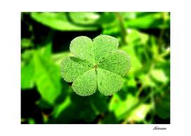Green Wet Flower