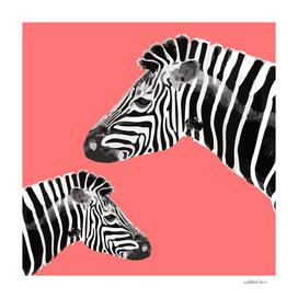 Zebra (coral)