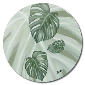 Monstera the four