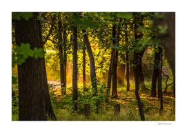 Magick wood