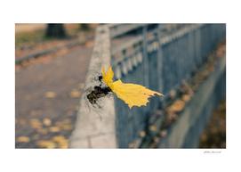 Fall alone