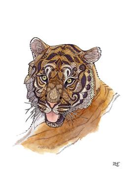 Immature Tiger