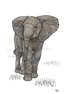 Adolescelephant