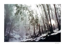Misty Trees, Mount Buffalo