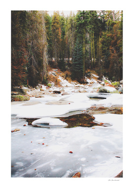 winter in the forest at Sequoia national park, USA