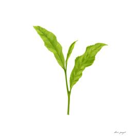 Tea leaf hand painting