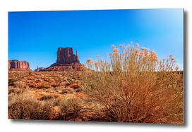 Golden flowers of the desert in Monument Valley