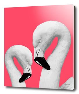 Flamingo Series 1