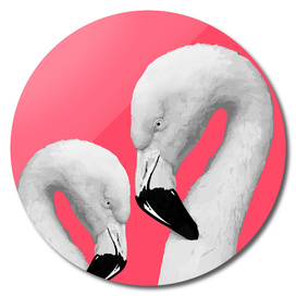 Flamingo Series 1