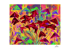 Oxalis (psychedelic version)