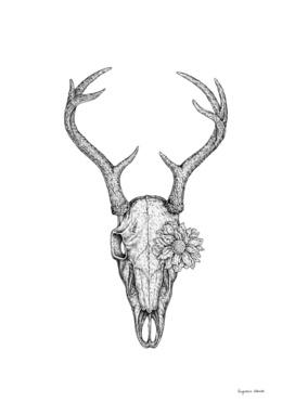 Deer Skull and Flower
