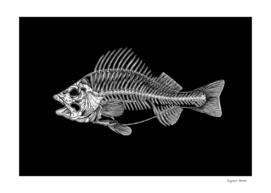 The Fish Skeleton (Black Background)