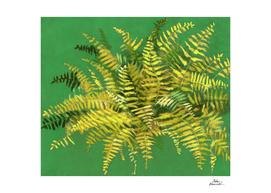 Fern, green & yellow