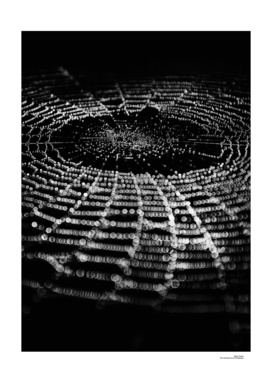 Spiderweb No 1