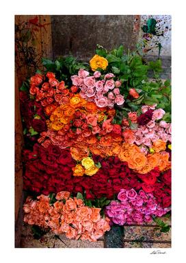 Roses by Lika Ramati