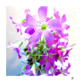 Purple Wood Sorrel Flowers III