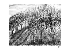 Trees On A Hill ~ Black & White