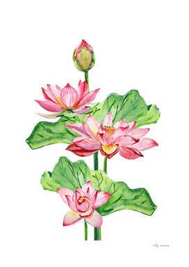 Watercolor flowers lotuses