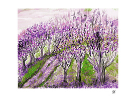 Purple Trees On A Hill