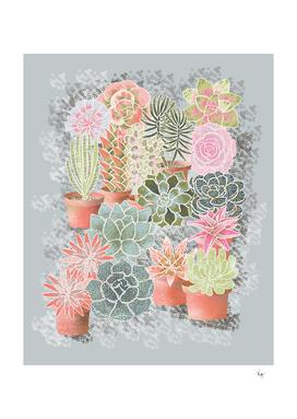 mon jardin de succulents