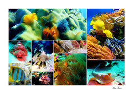 Underwater Caribbean Sea Collage