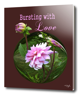 Bursting with Love Dahlia