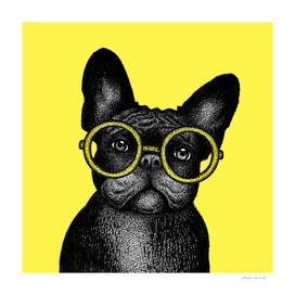 French bulldog in round glasses - portrait on yellow