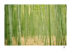 Into Bamboo