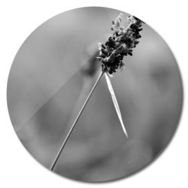 bnw flower