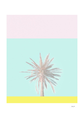 Pastel Candy Palm