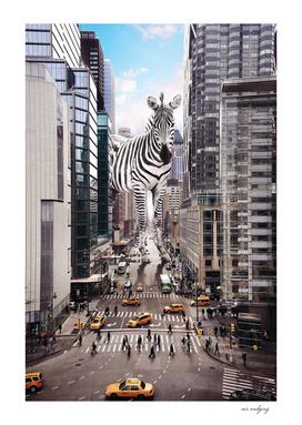 Zebra rules