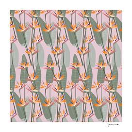 bird of paradise pink-01