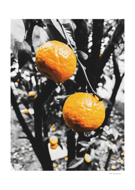 fresh orange fruit in the garden