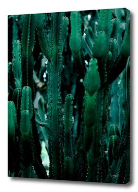 Cactus 04