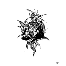 Flower Paeonia 2