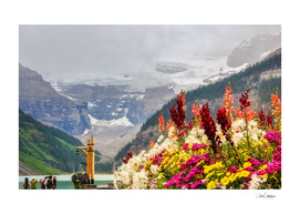Beautiful flowers at Lake Louise