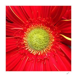 Sun in the Flower
