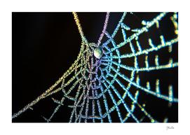 Colourful spiderweb