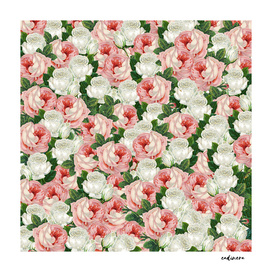 Juliet - Romantic Roses