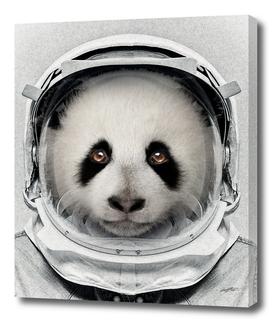 Panda Astro Bear