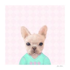 Portrait Of French Bull Dog