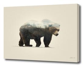 Bear | Double exposure