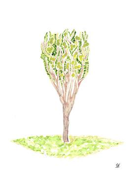 Crabapple Tree Watercolor Painting