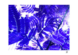 Mimosa Ferns 7 In Blue