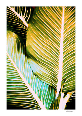 Tropical leaf detail